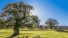 Vakıf Katılım 11 Bin 111 Fidanlık Hatıra Ormanı Oluşturacak